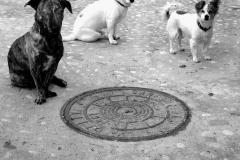 3-Hunde-SW