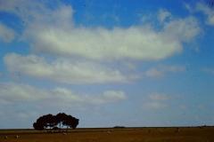 Land69