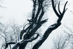 Winterb_ume